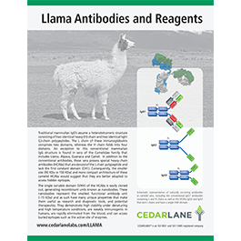 Llama Antibodies and Reagents Brochure