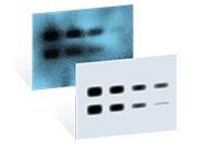 LI-COR C-DiGit Blot Scanner
