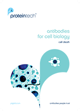 Proteintech Antibodies for Cell Biology and Cell Death Brochure