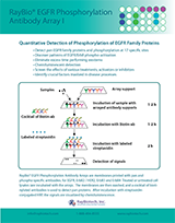 Ray Biotech EGFR Phosphorylation Antibody Array I Brochure